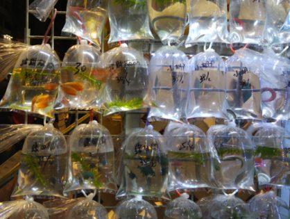 Nasz Hongkong [cz.9] - Muzeum Historii Hongkongu